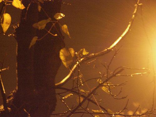 Őszi fa az utcai lámpa fényénél