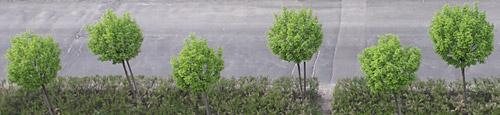 tavaszi zöldlombú fák