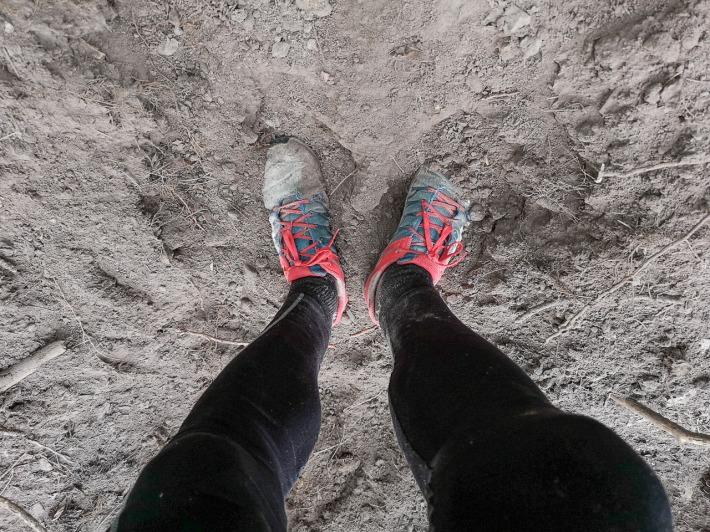Vaddisznók által porhanyósított talaj